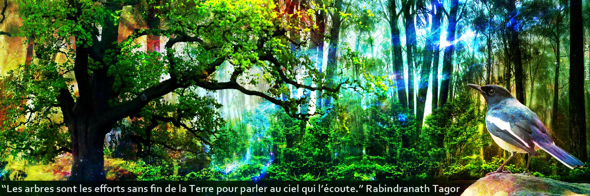 arbres_terre_mere1